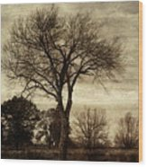A Tree Along The Roadside Wood Print
