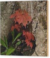 A Tree Hug Wood Print