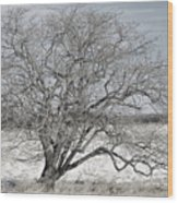 A Tree In Canaan Wood Print