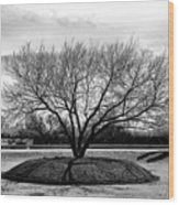 A Tree In Fort Worth Wood Print
