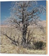 A Tree In The Dry Land Color Wood Print