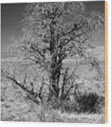 A Tree In The Dry Land Wood Print