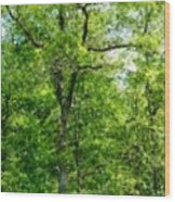 A Tree In The Woods At The Hacienda  Wood Print