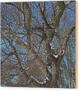 A Tree In Winter- Horizontal Wood Print