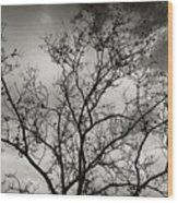 A Tree Laid Bare Wood Print