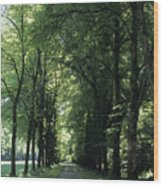 A Tree Lined Path Leads To Mad King Wood Print