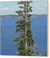 A Tree With A View Wood Print by Methune Hively