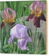 A Trios Of Irises Wood Print