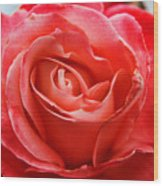 A Unique Rose Just For You Wood Print