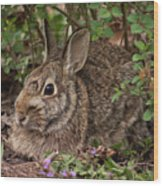 A Very Fine Bunny Resting Under The Lilac Bush Wood Print
