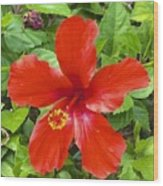 A Very Red Flower Wood Print