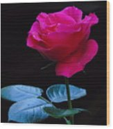 A Very Special Rose Wood Print