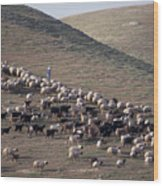 A View Of Sheep In The Judean Desert Wood Print