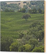 A Vineyard In The Anderson Valley Wood Print by Richard Nowitz