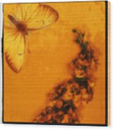 A Vintage Flower Butterfly Wood Print