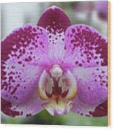 A Violet Orchid Wood Print