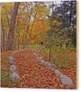 A Walk Along Natures Path Wood Print