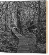 A Walk Through The Willowbrae Rainforest Black And White Wood Print