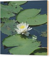 A Water Lily Bloom Wood Print