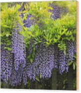 A Wealth Of Wisteria Wood Print