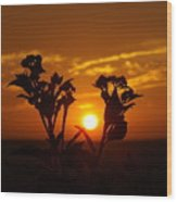 A Weed Sunset Wood Print