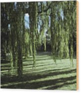 A Weeping Willow Casts Long, Cool Wood Print