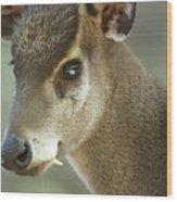 A Western Tufted Deer Elaphodus Wood Print