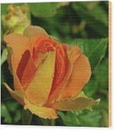 A Wet Rose  Wood Print
