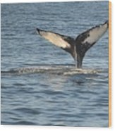 A Whale Of A Tail Bar Harbor Wood Print