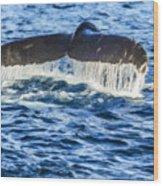 A Whale Of A Tail Wood Print