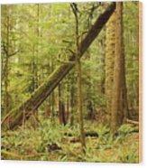 A Whisper In The Rainforest Wood Print