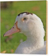 A White Duck, Side View Wood Print