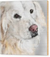 A White Golden Retriever Wood Print