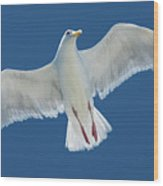 A White Gull Flying In Sky Wood Print