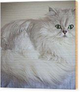 A White Persian Chinchilla Cat Wood Print