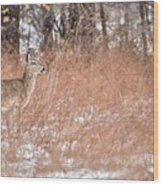 A White-tailed Deer In A Snow Storm Wood Print