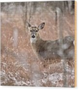 A White-tailed Deer In The Snow Wood Print