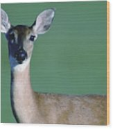 A White-tailed Deer On The Prairie Wood Print