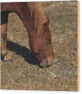 A Wild Pony In Assateague Wood Print