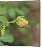 A Wilder Rose Wood Print