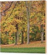 A Wonderful Walk In The Park Wood Print