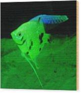 A Yellow Fish  Wood Print