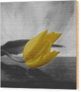 A Yellow Flower Wood Print