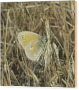 A Yellow Moth  Wood Print