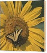 A Yellow Swallowtail Wood Print