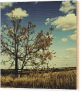 A Yellow Tree In A Middle Of A Dry Field - Wide Angle Wood Print