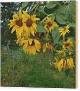 A Bit Ragged, Their Yellow Glory Wood Print