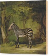 A Zebra Wood Print by George Stubbs