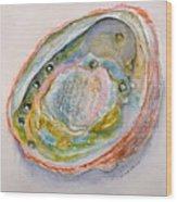 Abalone Study #2 Wood Print