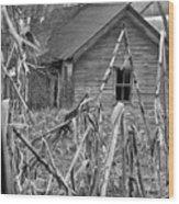 Abandoned Farmhouse Through Cornfield Wood Print